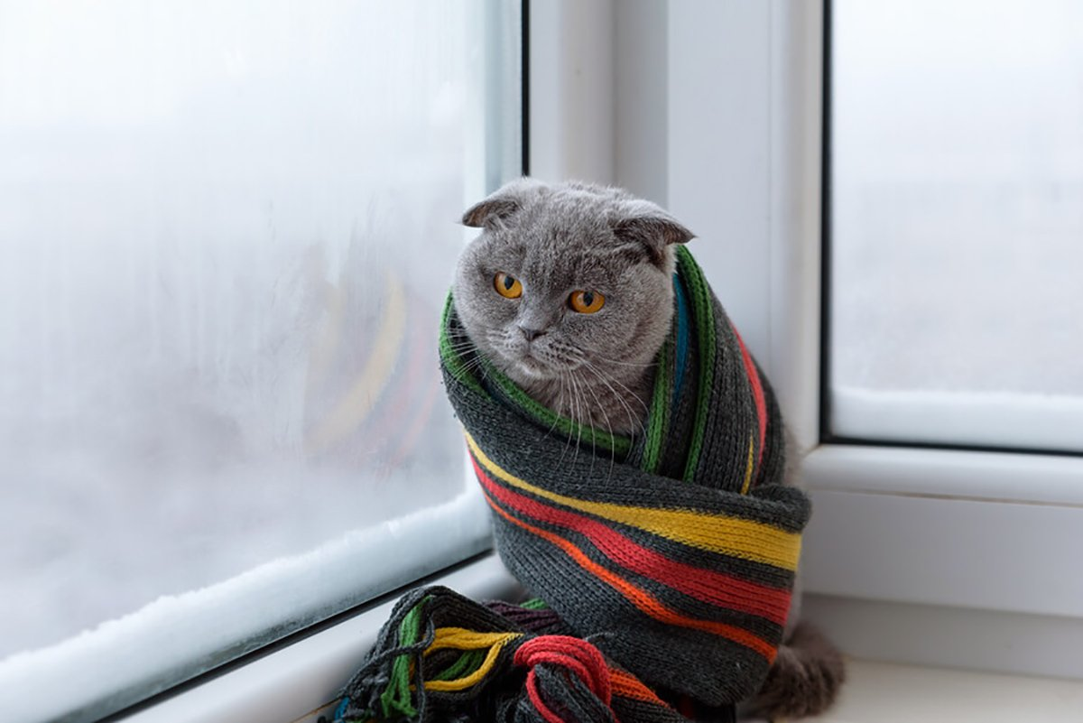 Cozy Cat Wrapped With Blanket